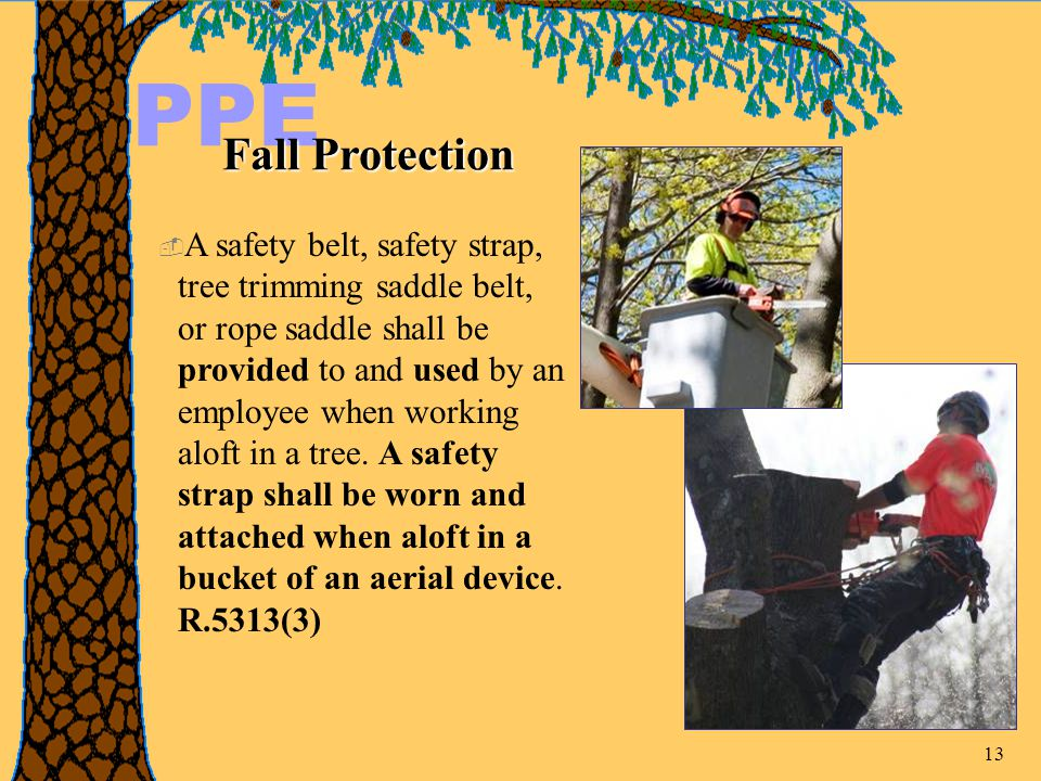 13 PPE Fall Protection  A safety belt, safety strap, tree trimming saddle belt, or rope saddle shall be provided to and used by an employee when working aloft in a tree.