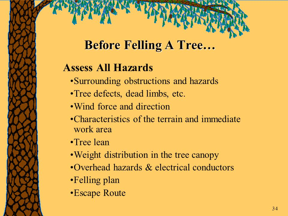 34 Before Felling A Tree… Assess All Hazards Surrounding obstructions and hazards Tree defects, dead limbs, etc.