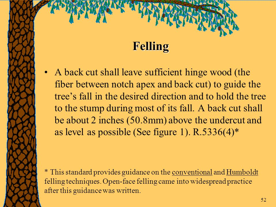 52 A back cut shall leave sufficient hinge wood (the fiber between notch apex and back cut) to guide the tree's fall in the desired direction and to hold the tree to the stump during most of its fall.
