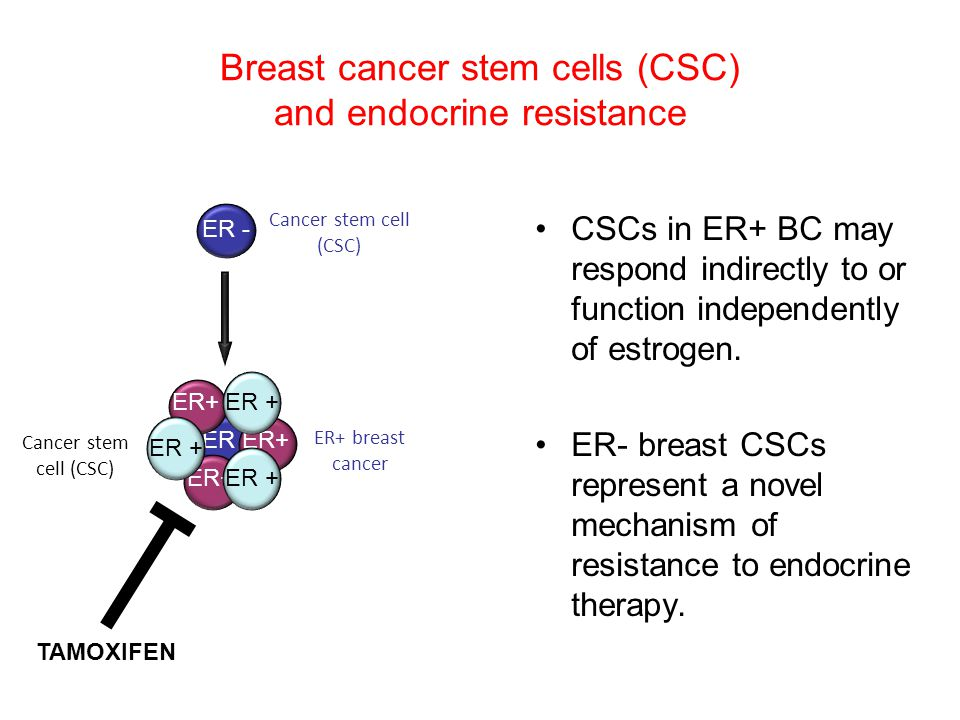 Breast cancer stem cells (CSC) and endocrine resistance CSCs in ER+ BC may respond indirectly to or function independently of estrogen.