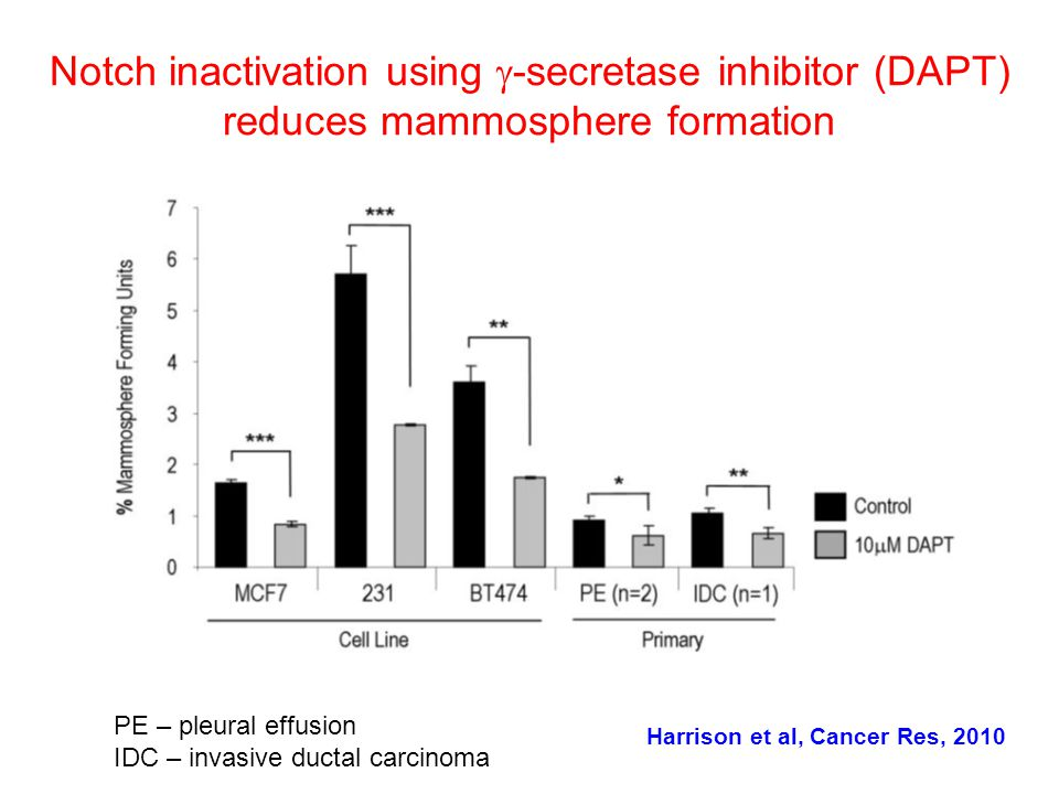 Notch inactivation using  -secretase inhibitor (DAPT) reduces mammosphere formation PE – pleural effusion IDC – invasive ductal carcinoma Harrison et al, Cancer Res, 2010