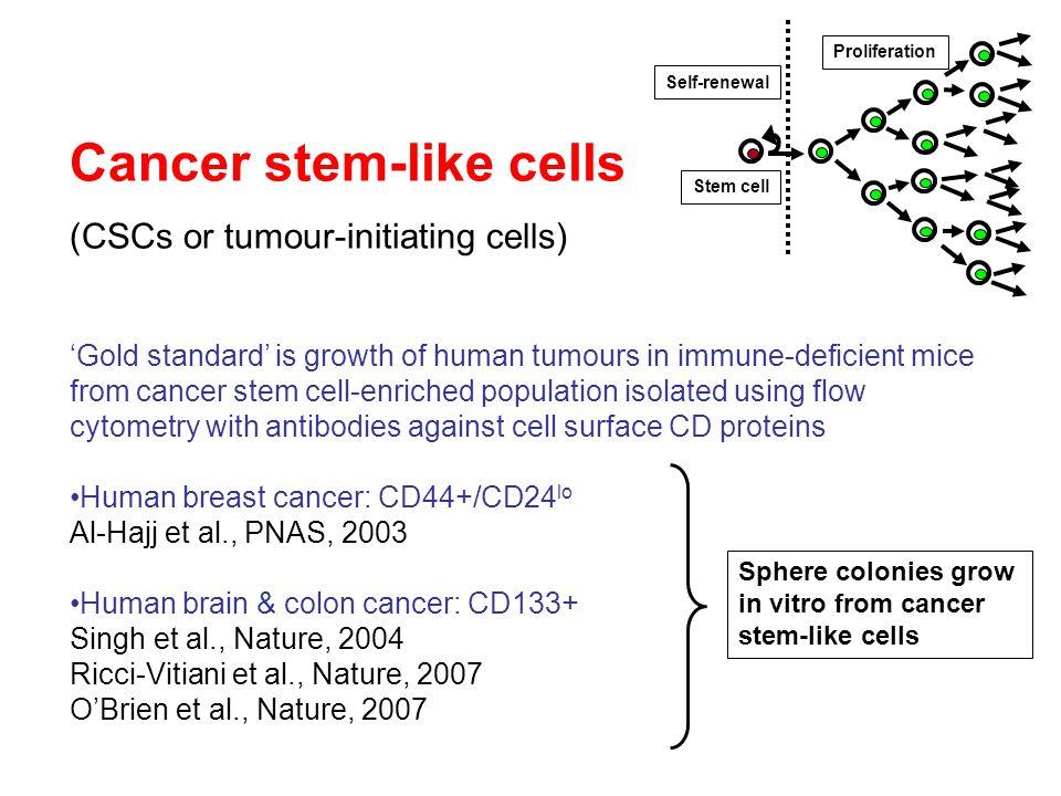 Notch inhibition using the  -secretase inhibitor DAPT sensitises breast cancer cells to chemotherapy Meurette et al, 2009, Cancer Res Melphelan  -secretase inhibitor