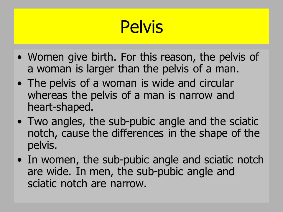 Pelvis Women give birth. For this reason, the pelvis of a woman is larger than the pelvis of a man. The pelvis of a woman is wide and circular whereas