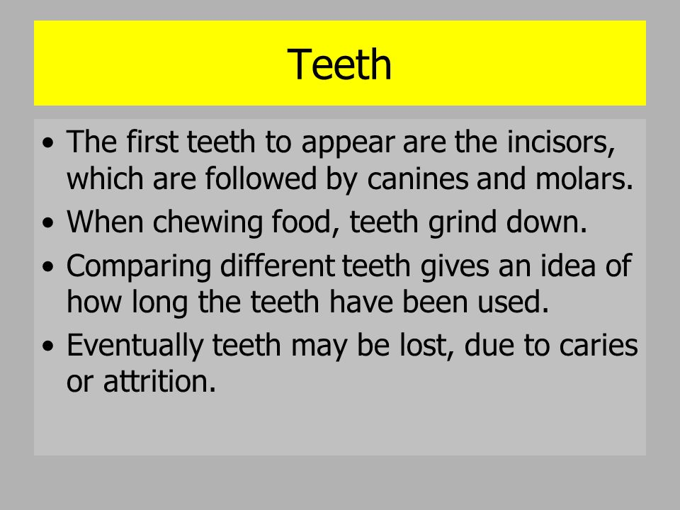 Teeth The first teeth to appear are the incisors, which are followed by canines and molars. When chewing food, teeth grind down. Comparing different t