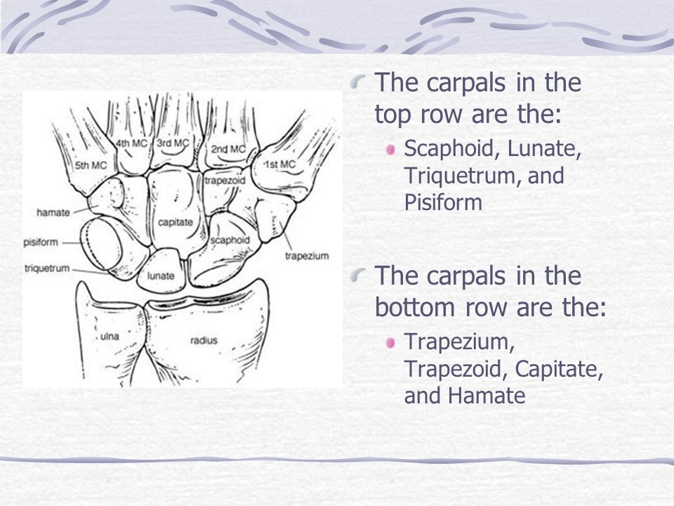 The carpals in the top row are the: Scaphoid, Lunate, Triquetrum, and Pisiform The carpals in the bottom row are the: Trapezium, Trapezoid, Capitate,