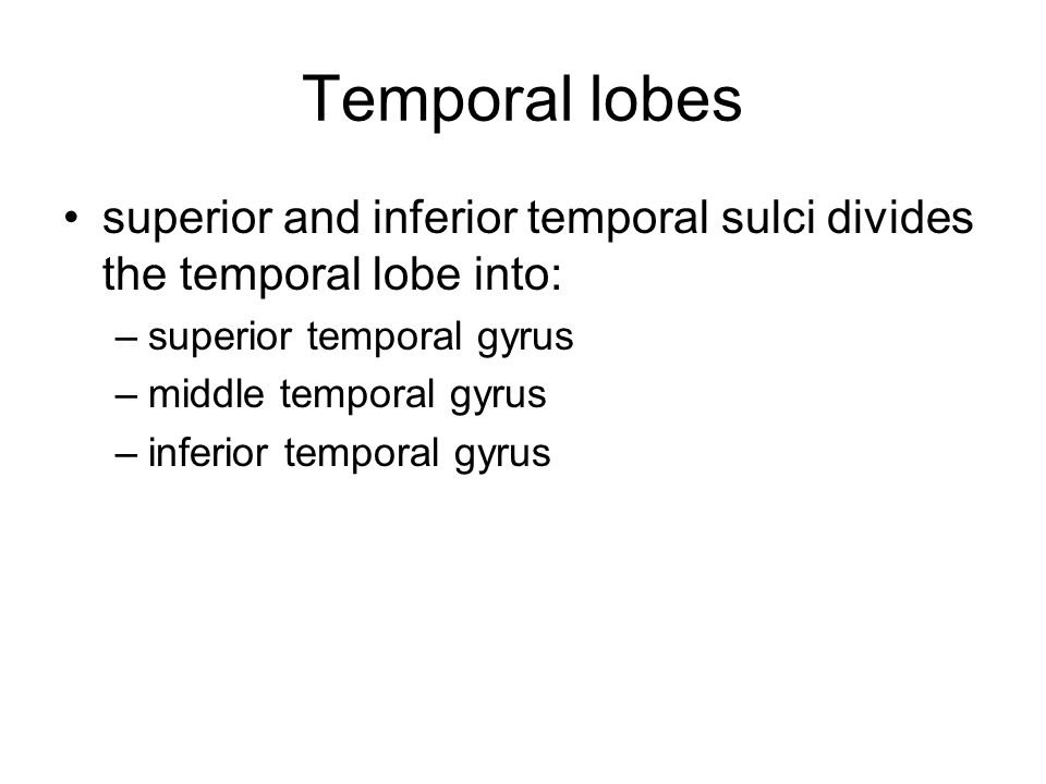 Temporal lobes superior and inferior temporal sulci divides the temporal lobe into: –superior temporal gyrus –middle temporal gyrus –inferior temporal gyrus