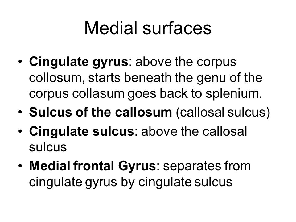 Medial surfaces Cingulate gyrus: above the corpus collosum, starts beneath the genu of the corpus collasum goes back to splenium.