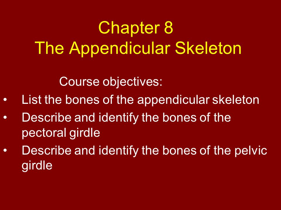 Chapter 8 The Appendicular Skeleton Course objectives: List the bones of the appendicular skeleton Describe and identify the bones of the pectoral gir