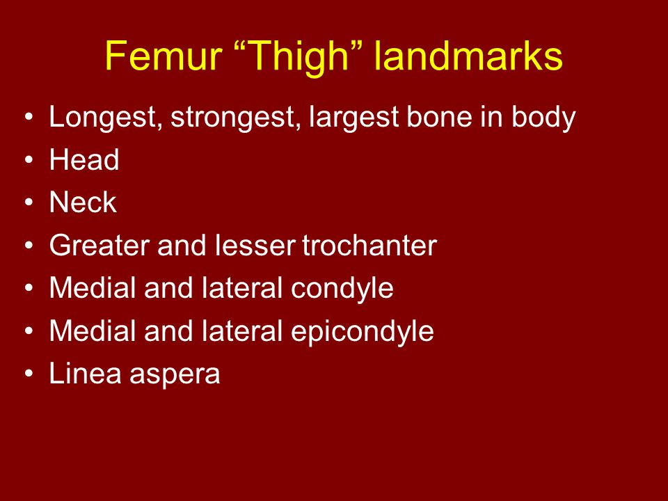 "Femur ""Thigh"" landmarks Longest, strongest, largest bone in body Head Neck Greater and lesser trochanter Medial and lateral condyle Medial and lateral"