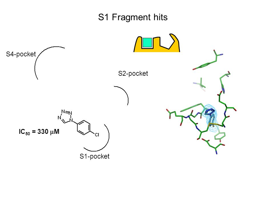 S1 Fragment hits S1-pocket S2-pocket S4-pocket IC 50 = 330  M