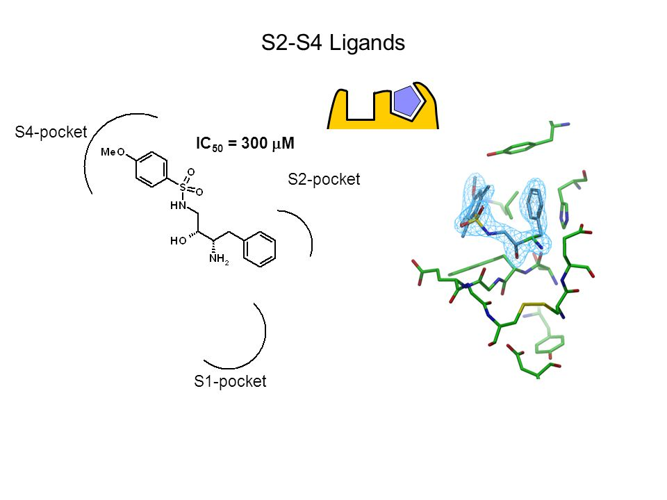 S1-pocket S2-pocket S4-pocket IC 50 = 300  M S2-S4 Ligands