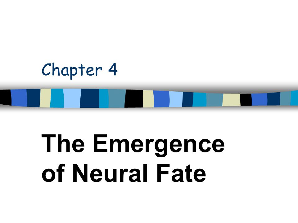 Chapter 4 The Emergence of Neural Fate