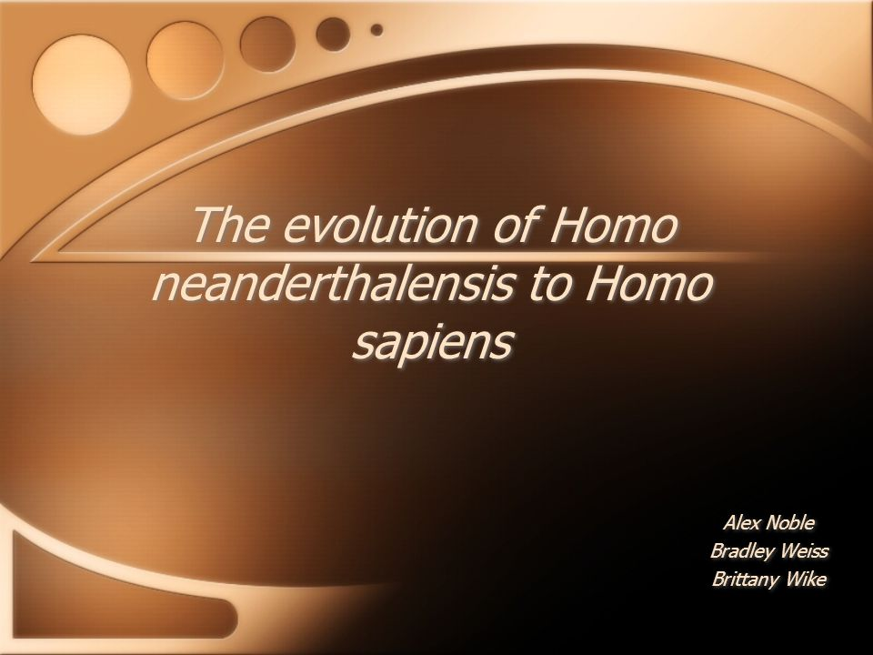 The evolution of Homo neanderthalensis to Homo sapiens Alex Noble Bradley Weiss Brittany Wike Alex Noble Bradley Weiss Brittany Wike