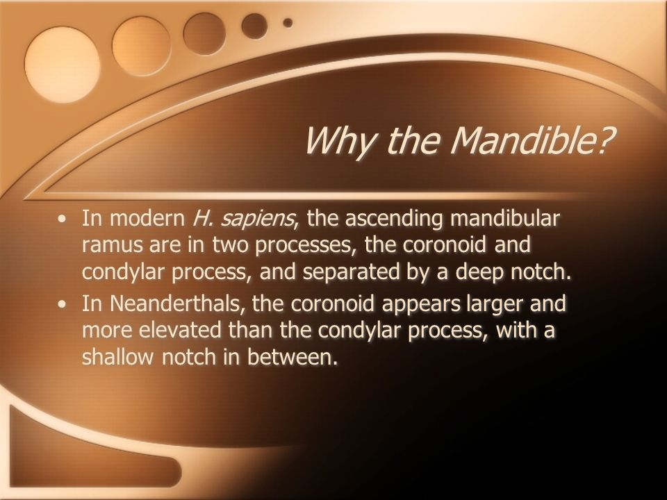 Why the Mandible? In modern H. sapiens, the ascending mandibular ramus are in two processes, the coronoid and condylar process, and separated by a dee