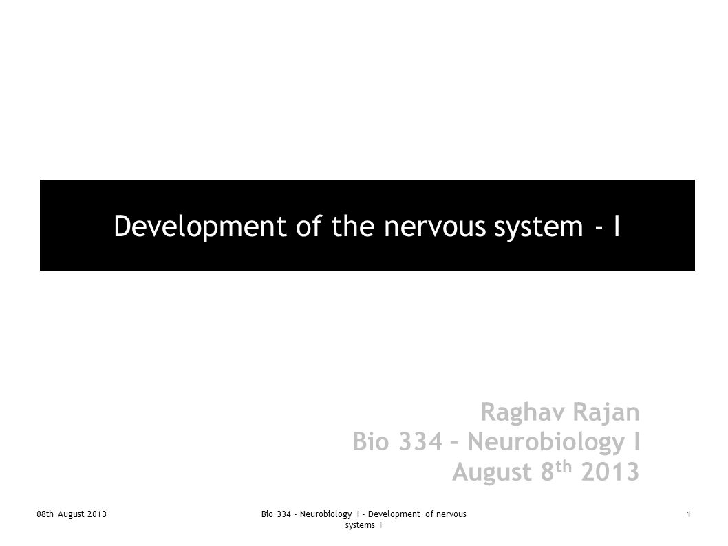 08th August 2013Bio 334 - Neurobiology I - Development of nervous systems I 12 Zebra fish – small differences in gastrulation due to differences in amount of yolk ● Epiboly ● 50% epiboly marks start of gastrulation at future dorsal margin – shield ● Mesoderm delaminates, moves inside ● Neural plate forms