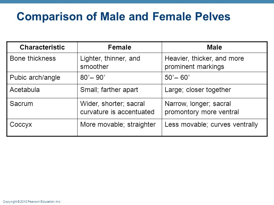 Copyright © 2010 Pearson Education, Inc. Comparison of Male and Female Pelves CharacteristicFemaleMale Bone thicknessLighter, thinner, and smoother He