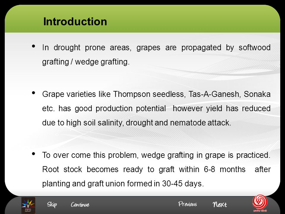 In drought prone areas, grapes are propagated by softwood grafting / wedge grafting.
