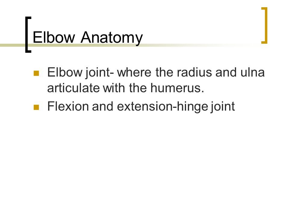 Elbow Anatomy Elbow joint- where the radius and ulna articulate with the humerus. Flexion and extension-hinge joint