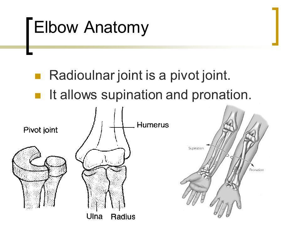 Elbow Anatomy The ulna does not move.The radius moves around the ulna.