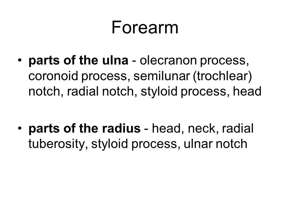Forearm parts of the ulna - olecranon process, coronoid process, semilunar (trochlear) notch, radial notch, styloid process, head parts of the radius