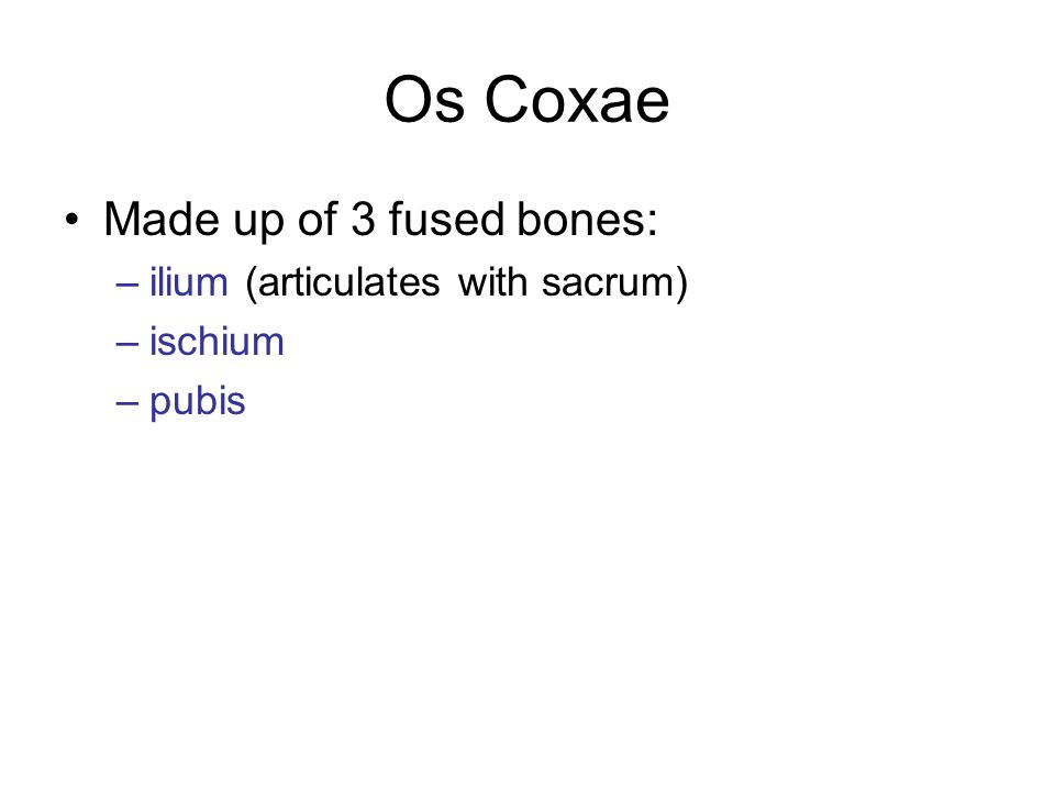 Os Coxae Made up of 3 fused bones: –ilium (articulates with sacrum) –ischium –pubis