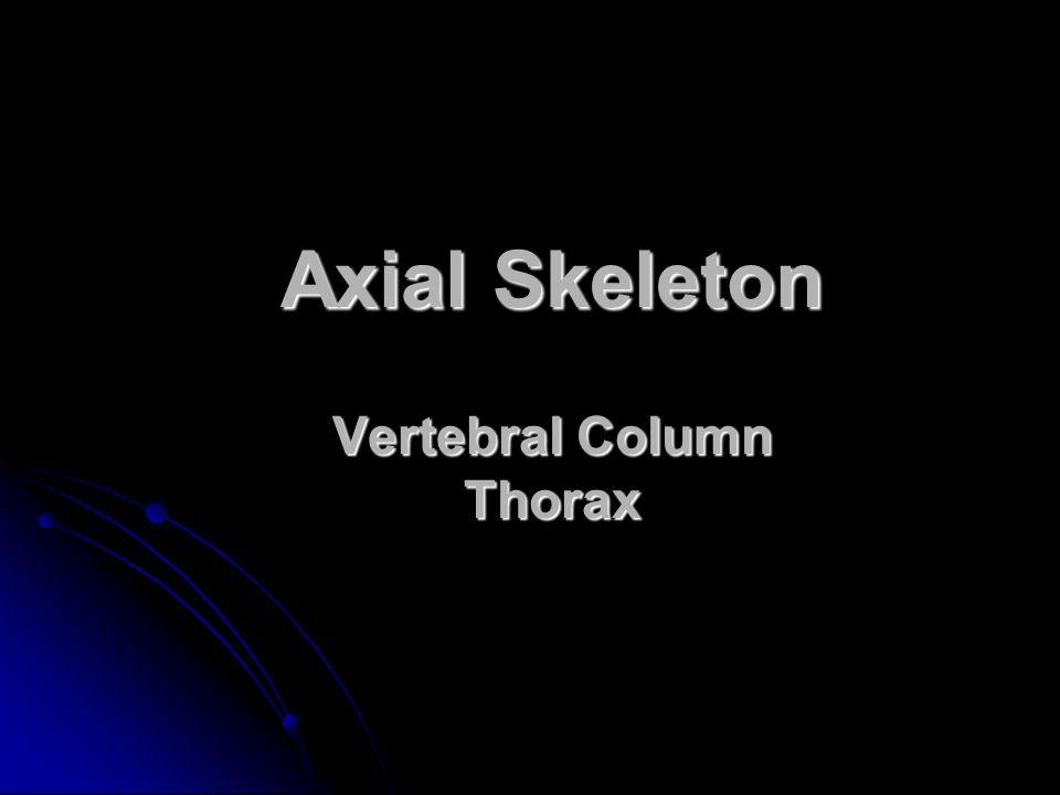 Axial Skeleton Vertebral Column Thorax