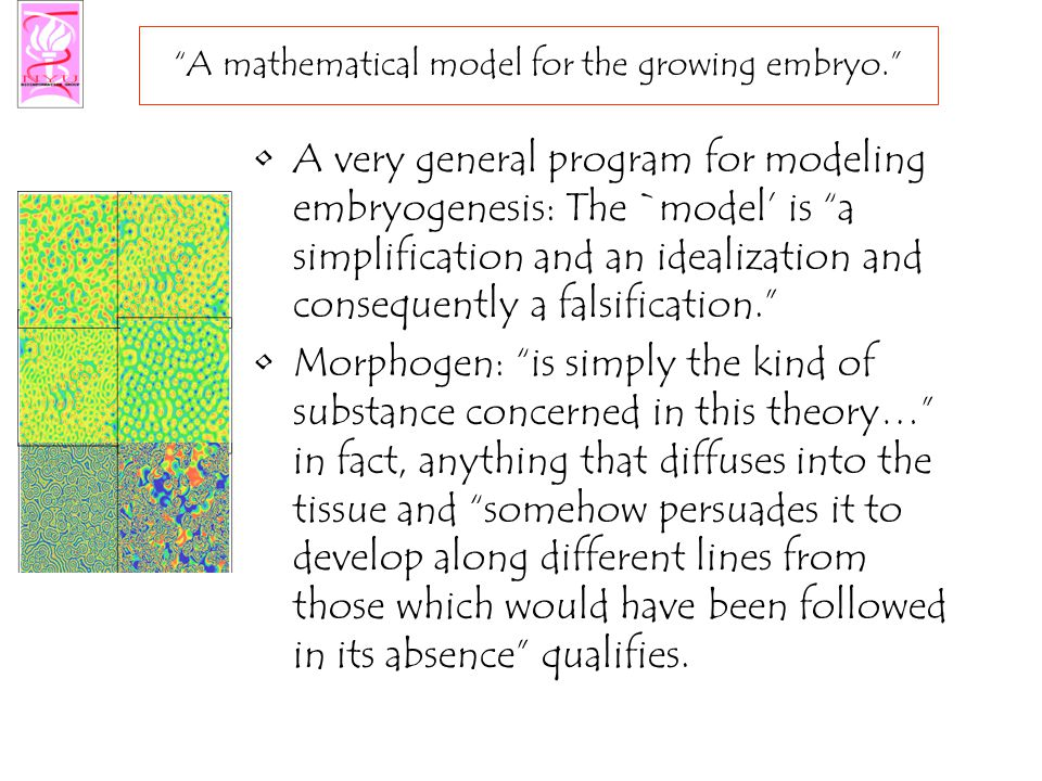 A mathematical model for the growing embryo. A very general program for modeling embryogenesis: The `model' is a simplification and an idealization and consequently a falsification. Morphogen: is simply the kind of substance concerned in this theory… in fact, anything that diffuses into the tissue and somehow persuades it to develop along different lines from those which would have been followed in its absence qualifies.