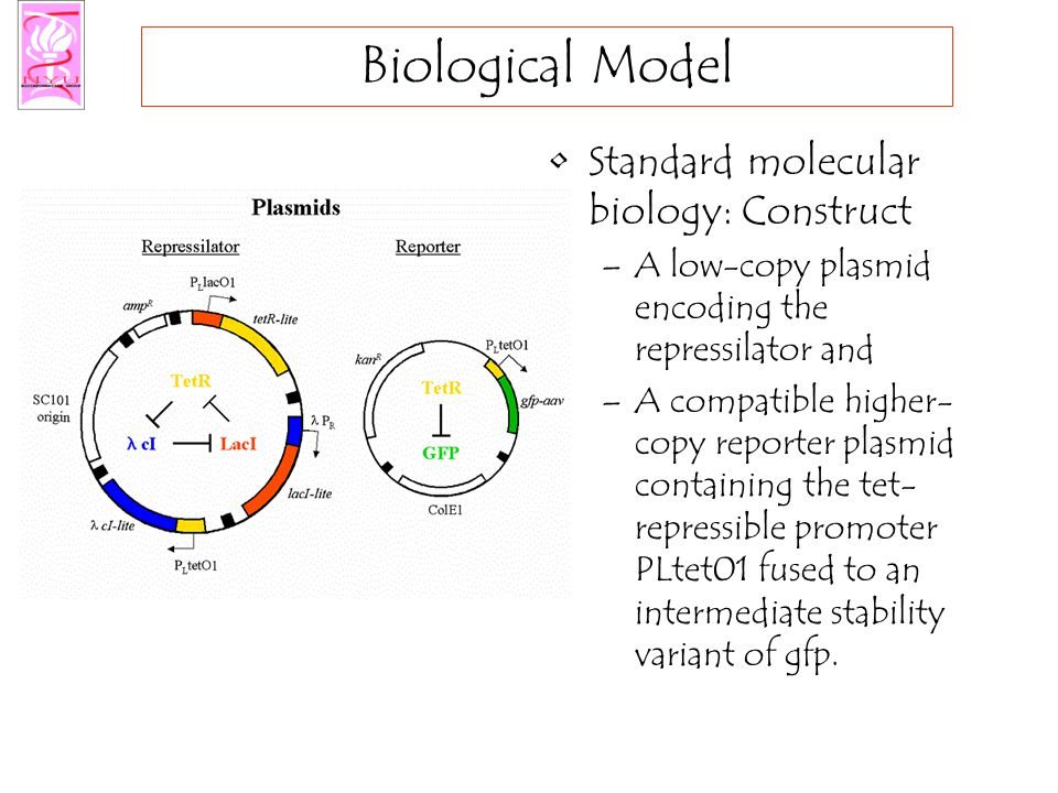 Biological Model Standard molecular biology: Construct –A low-copy plasmid encoding the repressilator and –A compatible higher- copy reporter plasmid containing the tet- repressible promoter PLtet01 fused to an intermediate stability variant of gfp.