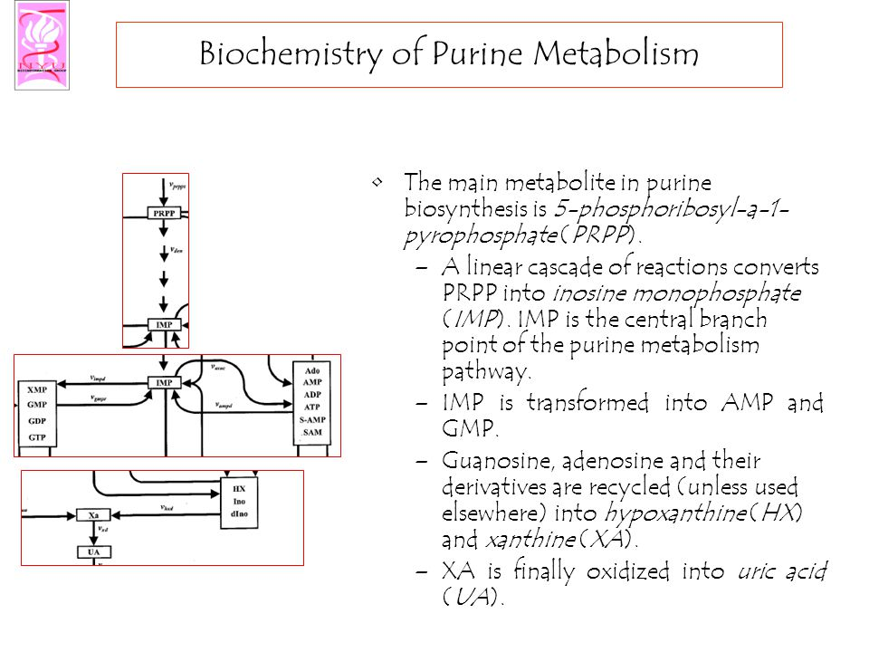 Biochemistry of Purine Metabolism The main metabolite in purine biosynthesis is 5-phosphoribosyl-a-1- pyrophosphate (PRPP).