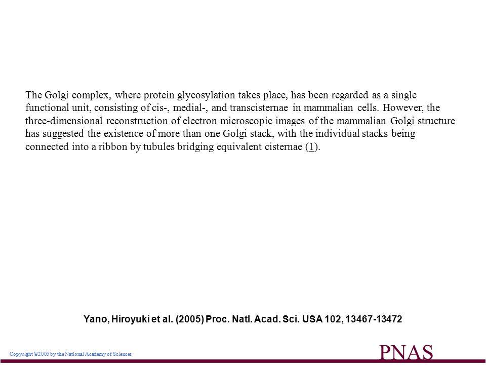 Copyright ©2005 by the National Academy of Sciences Yano, Hiroyuki et al.