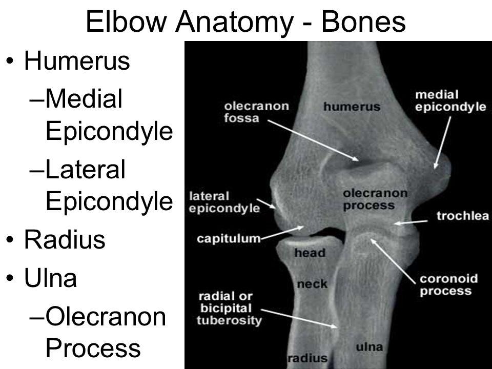 Elbow Anatomy - Bones Humerus –Medial Epicondyle –Lateral Epicondyle Radius Ulna –Olecranon Process