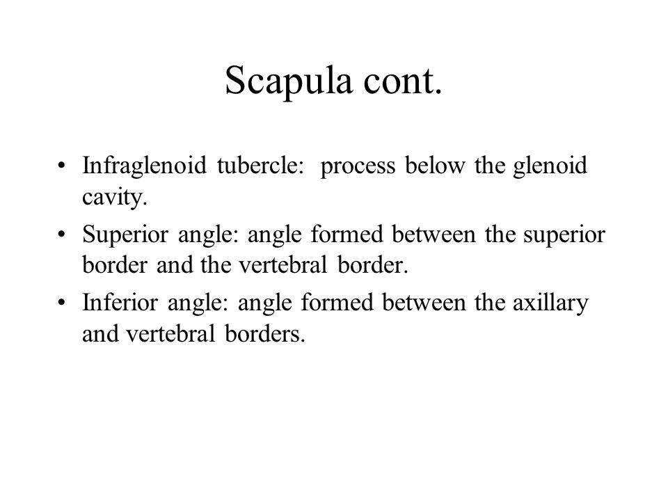 Scapula cont. Glenoid cavity: Arm Socket Scapular notch: Notch between the Superior border and the Coracoid process. Infraspinous Fossa: Surface area