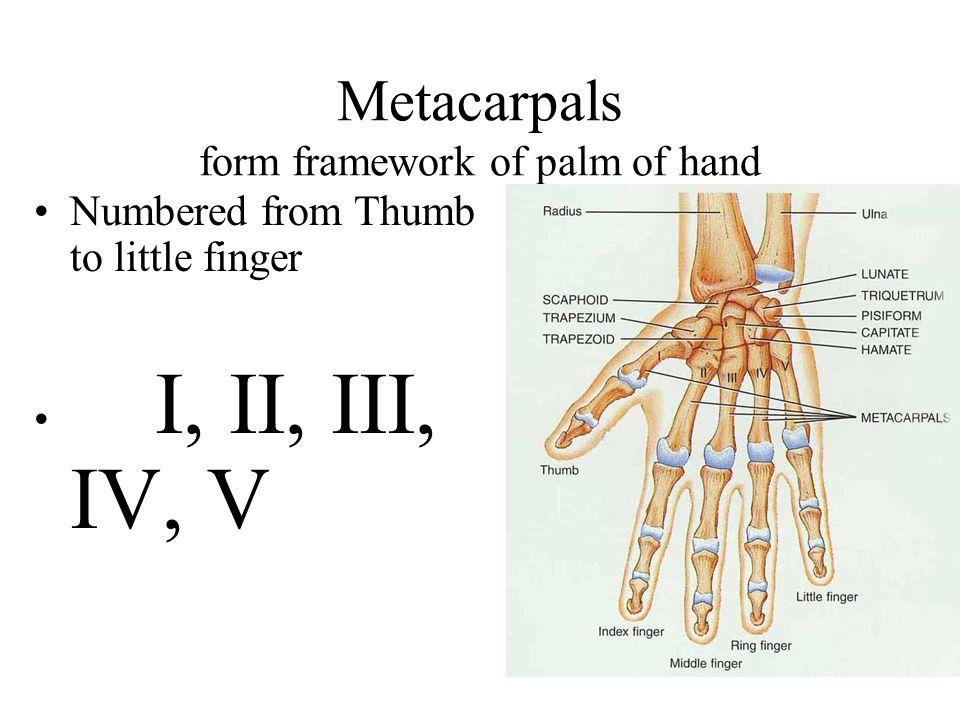 Carpals Wrist bones Proximal Row: little finger to thumb ---- pisiform, triquetrum, lunate, & scaphoid. Distal Row: hamate, capitate, trapezoid, & tra