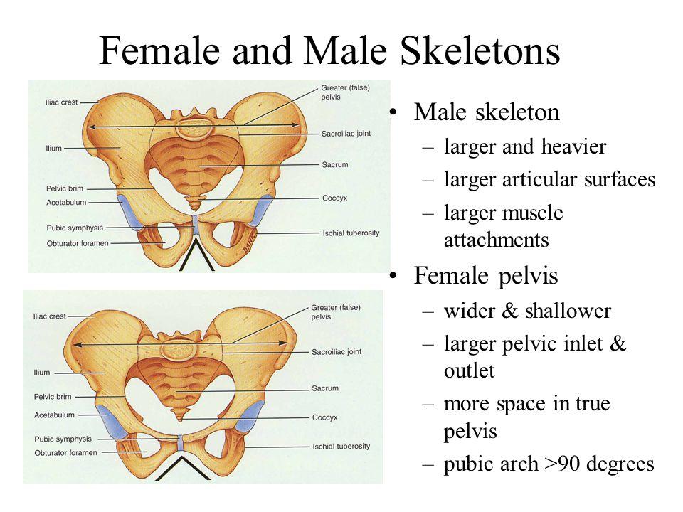 true pelvis vs false pelvis