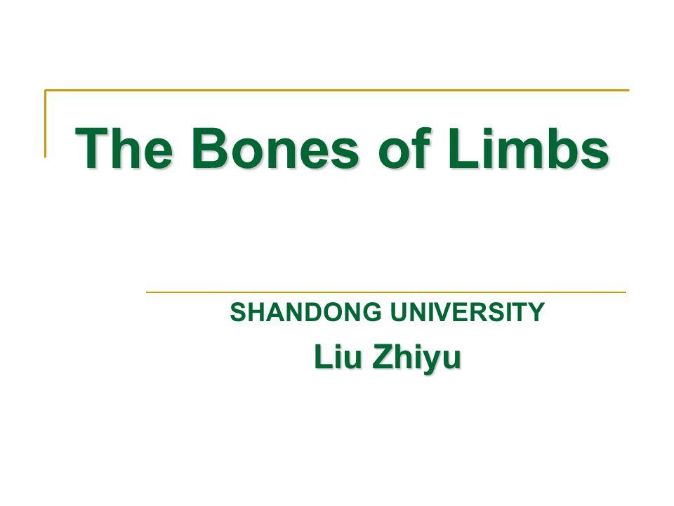 Bones of upper limb Composition: Should girdle  Clavicle  Scapula Bones of free upper limb  Arm: humerus  Forearm Radius Ulna  Bones of hand Carpal bones Metacarpal bones Phalanges of fingers