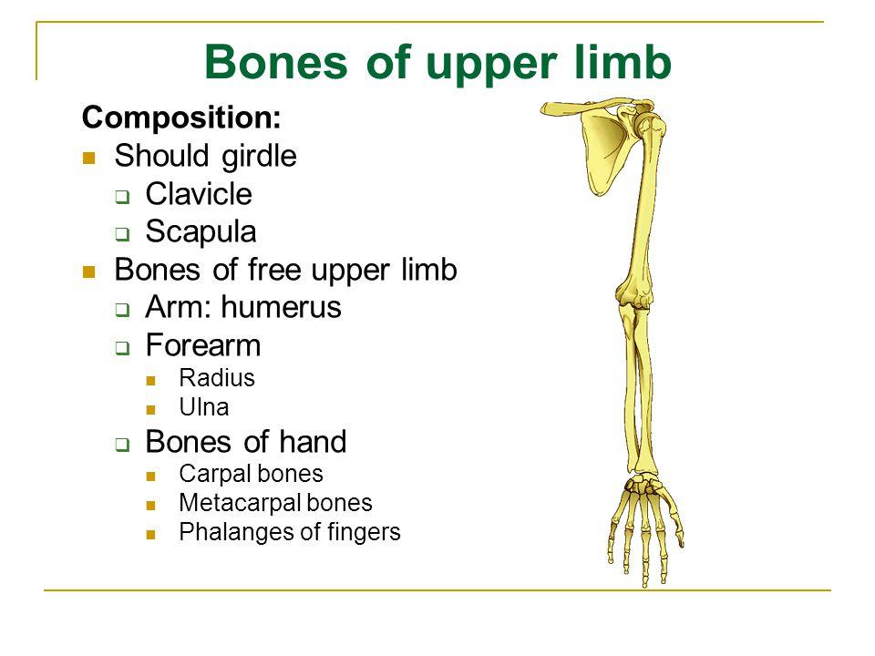 Carpal bones P.S. L. Tq. Tm. Td. C. H.