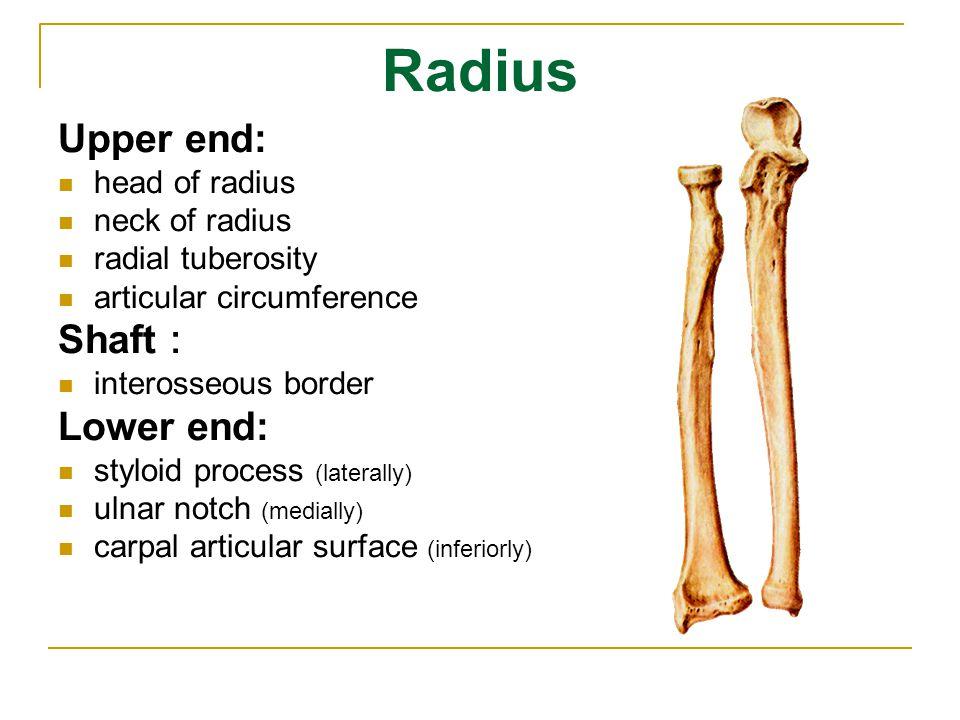 Patella triangular sesamoid bone