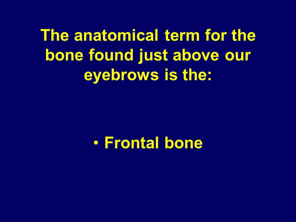 The anatomical term for the bone found just above our eyebrows is the: Frontal bone