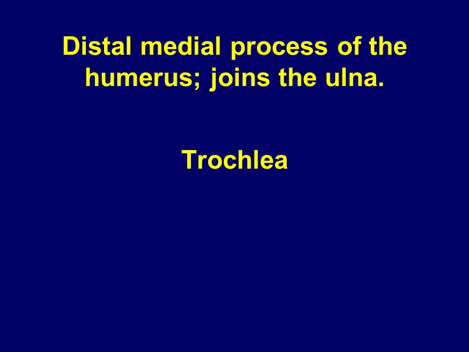 Distal medial process of the humerus; joins the ulna. Trochlea
