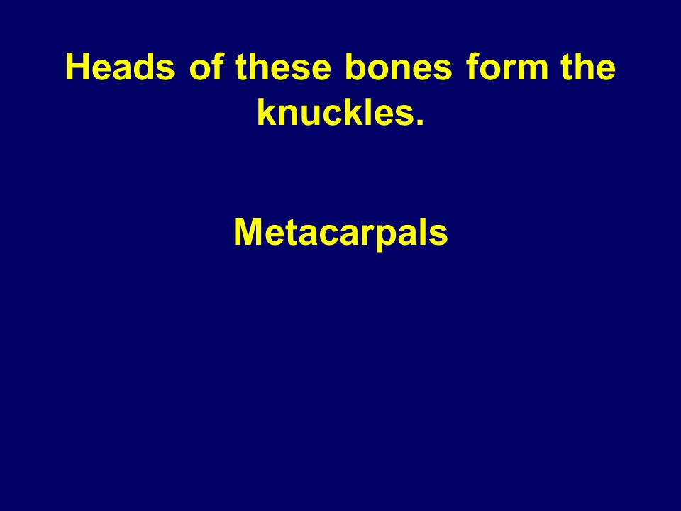 Heads of these bones form the knuckles. Metacarpals