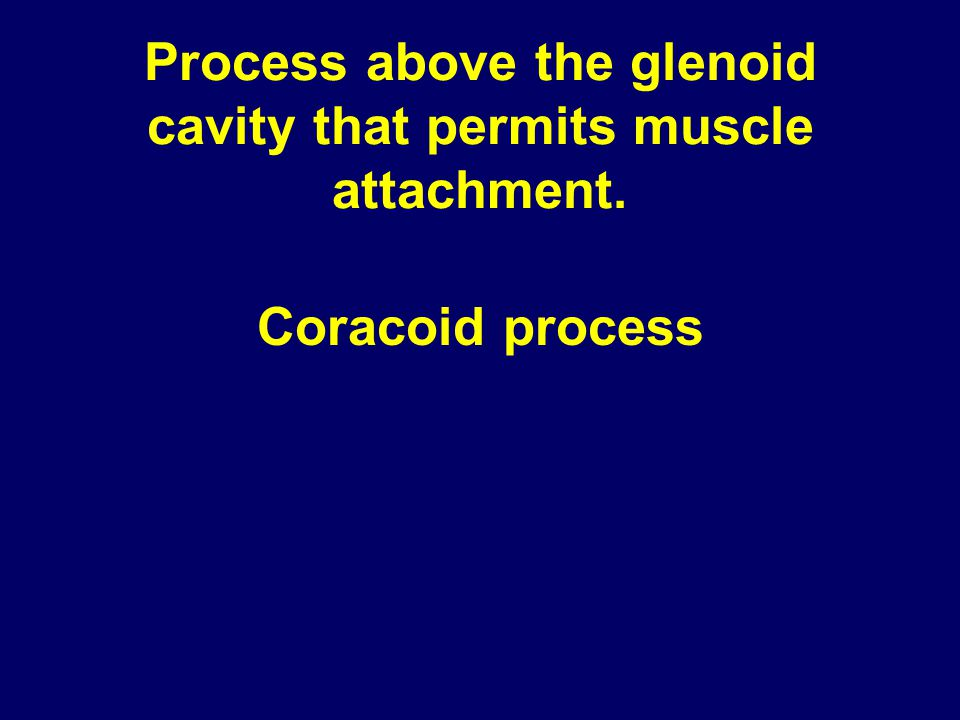 Process above the glenoid cavity that permits muscle attachment. Coracoid process