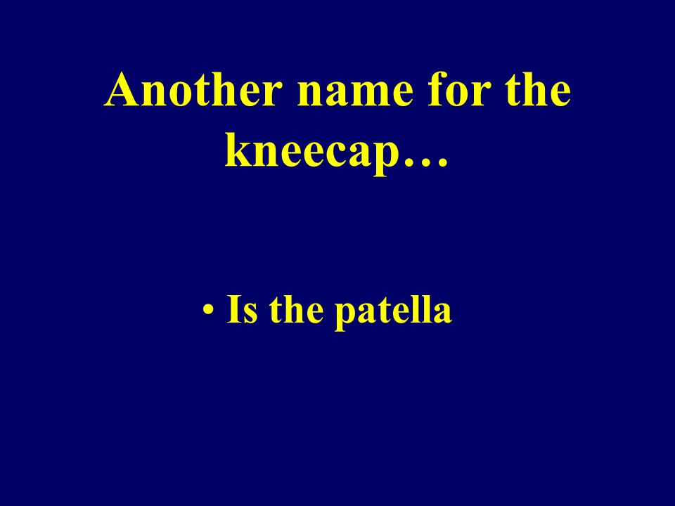 Another name for the kneecap… Is the patella