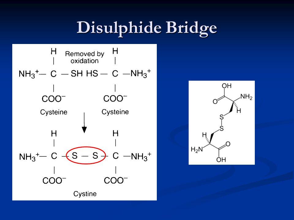 Disulphide Bridge
