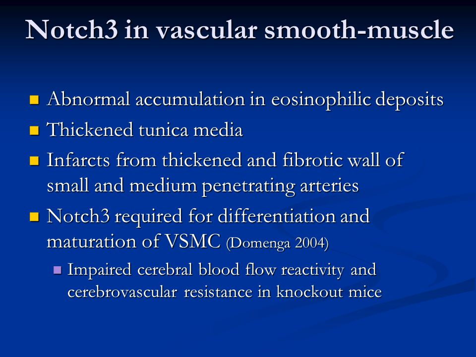 Notch3 in vascular smooth-muscle Abnormal accumulation in eosinophilic deposits Abnormal accumulation in eosinophilic deposits Thickened tunica media Thickened tunica media Infarcts from thickened and fibrotic wall of small and medium penetrating arteries Infarcts from thickened and fibrotic wall of small and medium penetrating arteries Notch3 required for differentiation and maturation of VSMC (Domenga 2004) Notch3 required for differentiation and maturation of VSMC (Domenga 2004) Impaired cerebral blood flow reactivity and cerebrovascular resistance in knockout mice Impaired cerebral blood flow reactivity and cerebrovascular resistance in knockout mice