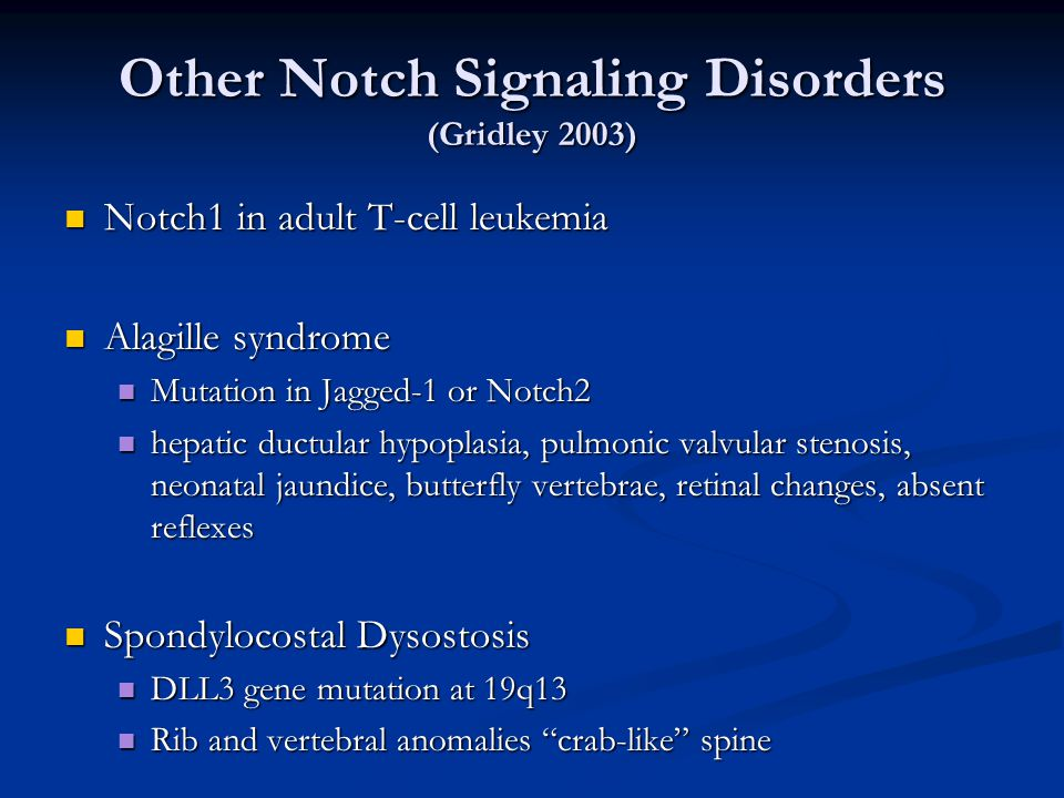 Other Notch Signaling Disorders (Gridley 2003) Notch1 in adult T-cell leukemia Notch1 in adult T-cell leukemia Alagille syndrome Alagille syndrome Mutation in Jagged-1 or Notch2 Mutation in Jagged-1 or Notch2 hepatic ductular hypoplasia, pulmonic valvular stenosis, neonatal jaundice, butterfly vertebrae, retinal changes, absent reflexes hepatic ductular hypoplasia, pulmonic valvular stenosis, neonatal jaundice, butterfly vertebrae, retinal changes, absent reflexes Spondylocostal Dysostosis Spondylocostal Dysostosis DLL3 gene mutation at 19q13 DLL3 gene mutation at 19q13 Rib and vertebral anomalies crab-like spine Rib and vertebral anomalies crab-like spine