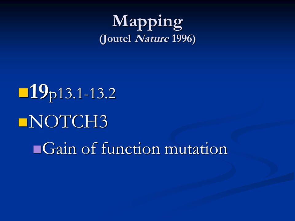 Mapping (Joutel Nature 1996) 19 p13.1-13.2 19 p13.1-13.2 NOTCH3 NOTCH3 Gain of function mutation Gain of function mutation