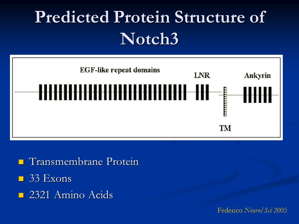 Predicted Protein Structure of Notch3 Transmembrane Protein Transmembrane Protein 33 Exons 33 Exons 2321 Amino Acids 2321 Amino Acids Federico Neurol Sci 2005