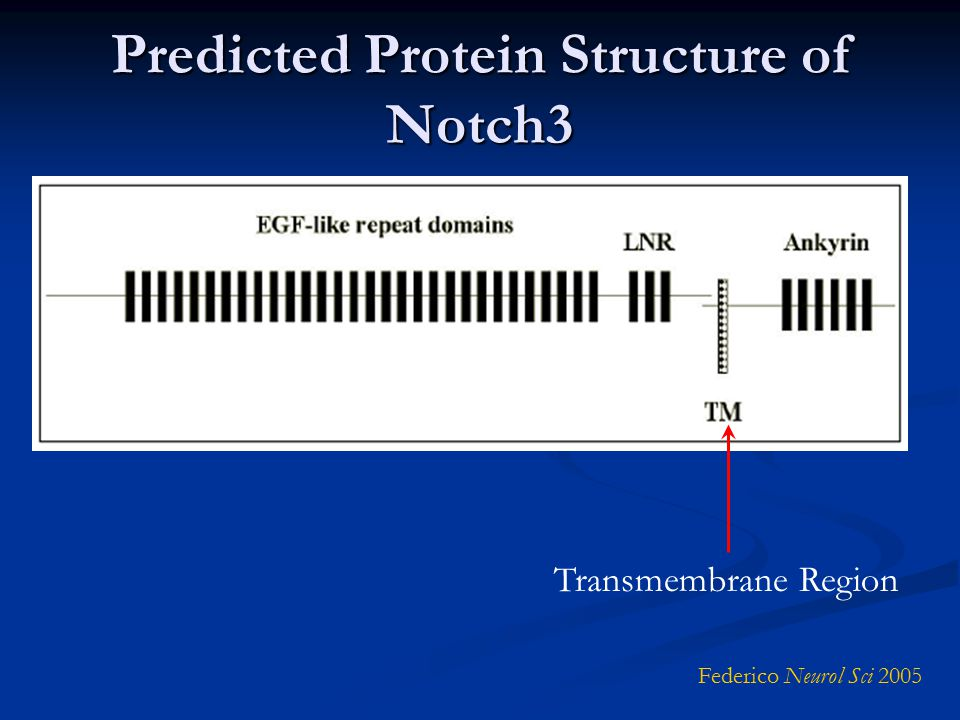 Predicted Protein Structure of Notch3 Federico Neurol Sci 2005 Transmembrane Region