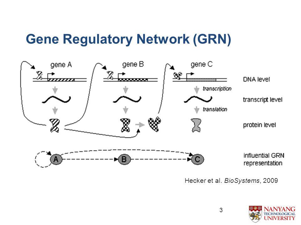 Gene Regulatory Network (GRN) Hecker et al. BioSystems, 2009 3