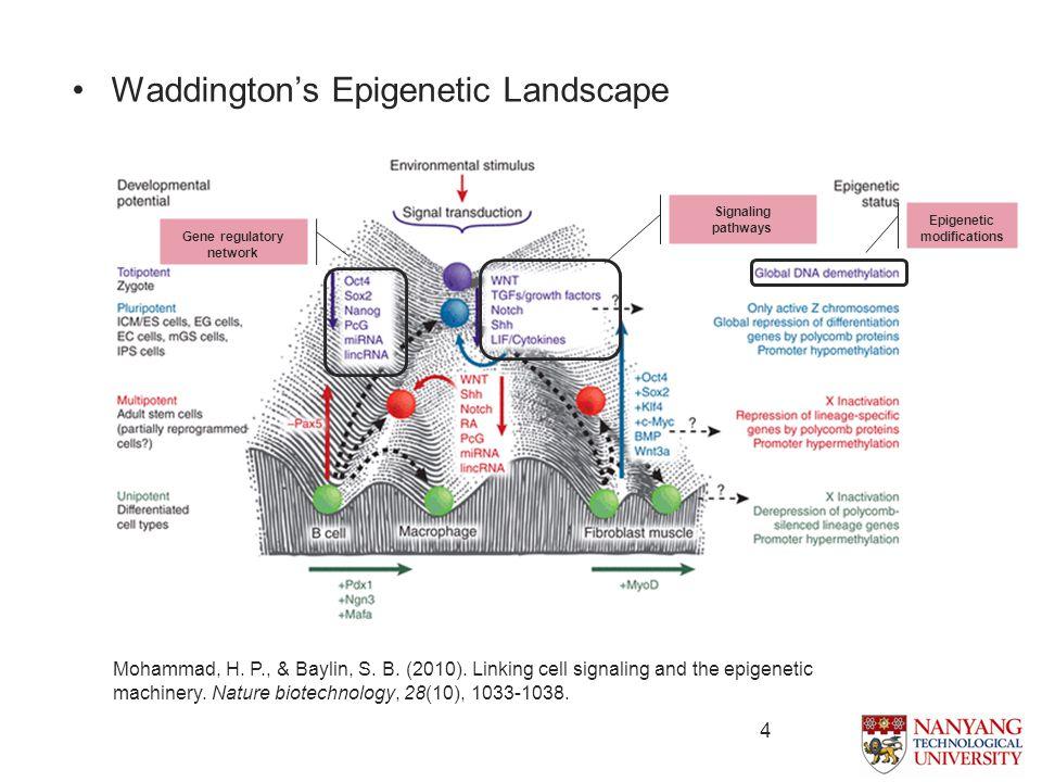 4 Waddington's Epigenetic Landscape Mohammad, H. P., & Baylin, S.